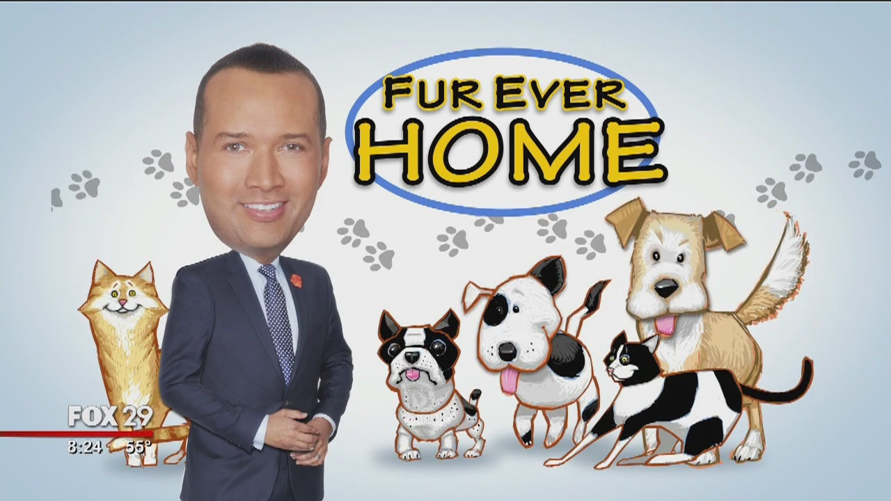 These pups and kitties are searching for furever homes!