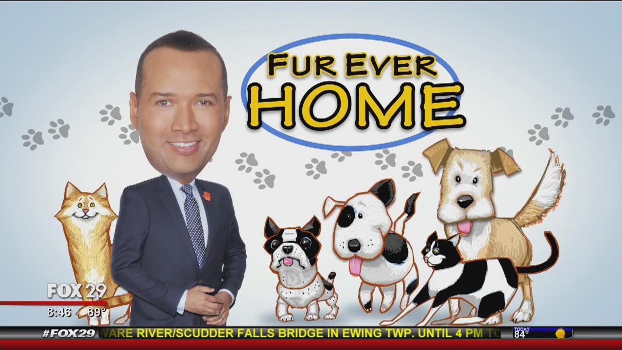 Furever Home: Thomas shows us some pets looking for forever homes