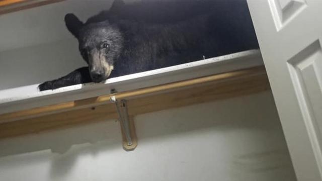 Bear found sleeping inside a closet in a house in Montana
