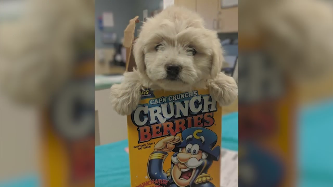 Dog dropped off at California animal shelter in cereal box now adopted