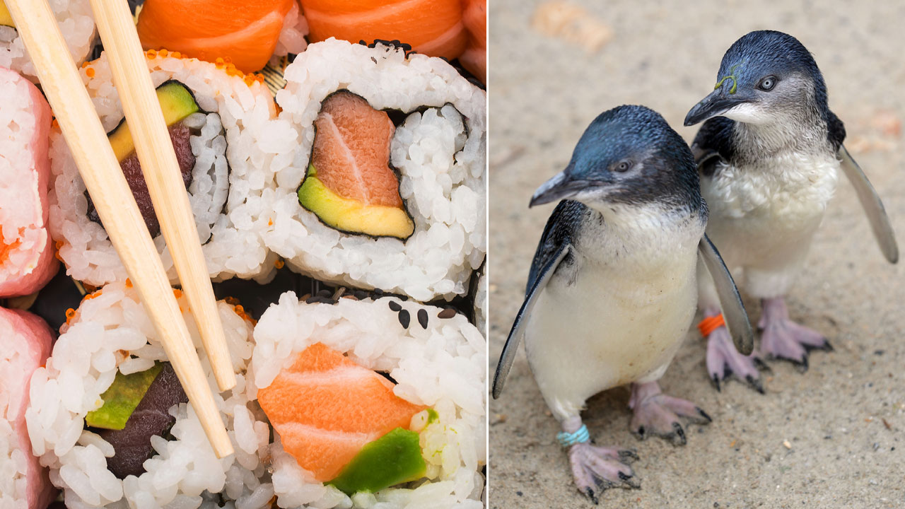Police apprehend penguins who keep sneaking into sushi restaurant