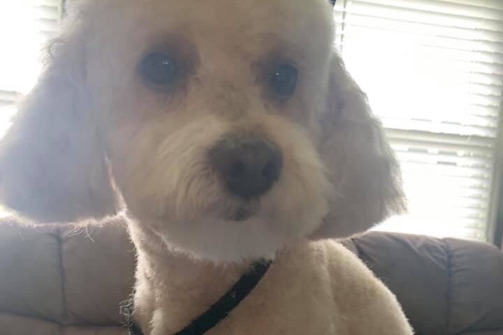 Police investigate death of dog believed to have been shot in Maple Shade